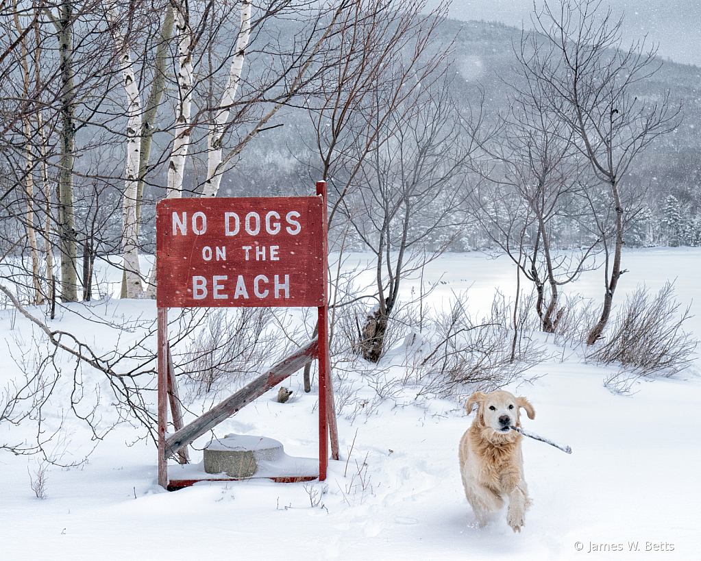 No Dogs on the Beach