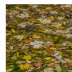 © Philip B. Ludwig PhotoID # 15786199: Autumn Leaves In Shallow Stream