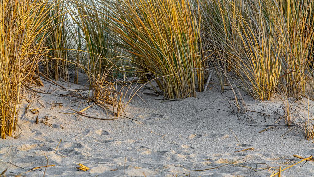 Some Beach, Somewhere