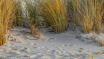 Some Beach, Somew...