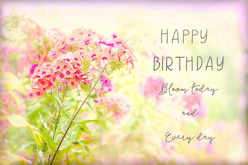 Happy Birthday Flowers - ID: 15792075 © Marilyn Cornwell
