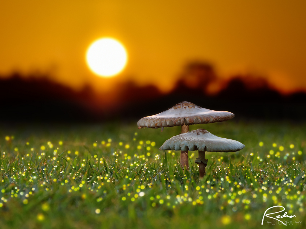 February 2020 Photo Contest Grand Prize Winner - Magical Sunrise