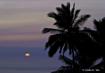 Palm Tree Silhout...