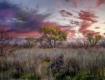 Coon Bluff Sunset...