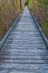 Boardwalk In The ...