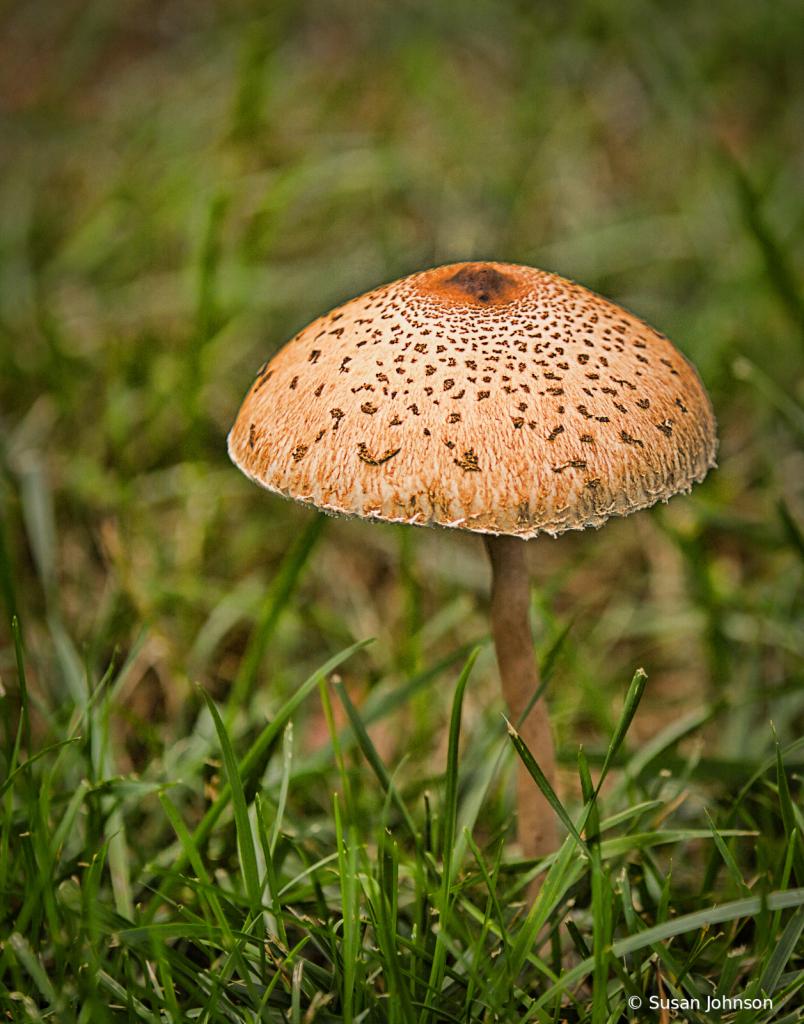 Mushroom Picking - ID: 15813090 © Susan Johnson