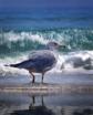 Seagull Prancing ...