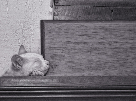 Catnap from