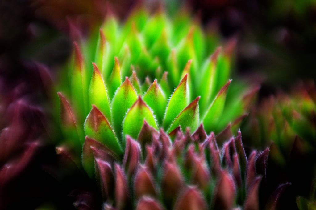 Bright Succulent