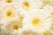 White Flower Bouq...