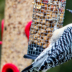 © Robert Hambley PhotoID # 15815002: Red Bellied Woodpecker