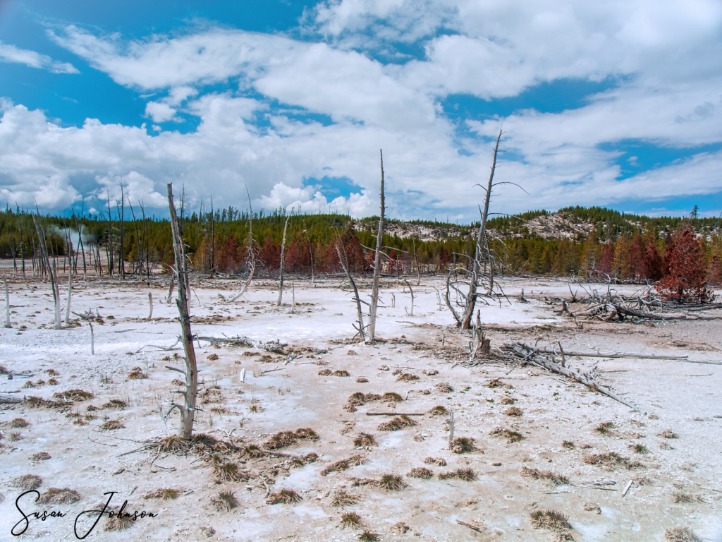 Yellowstone in Spring - ID: 15815140 © Susan Johnson