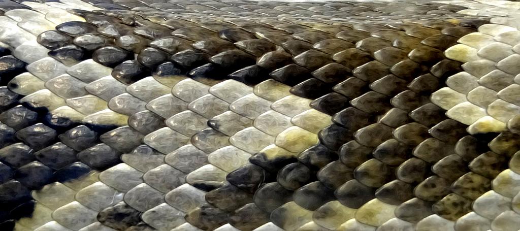 Snakeskin Pattern - ID: 15816288 © Carolyn  M. Fletcher