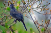 A Gray Catbird