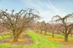 Orchards in April...