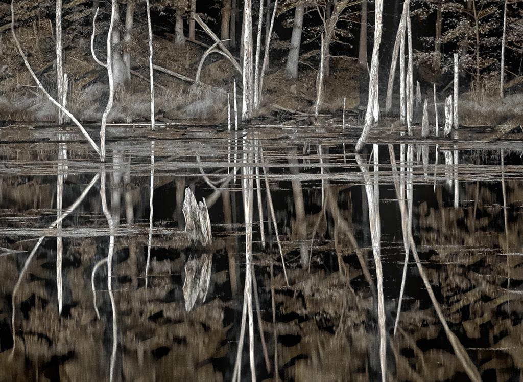 Ghosts of Little Seneca Creek - Clarksburg MD - ID: 15817386 © Martin L. Heavner