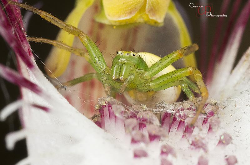 Spider on a spider