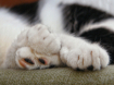 Feline paws from ...