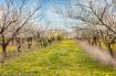 Wabi Sabi Orchard...