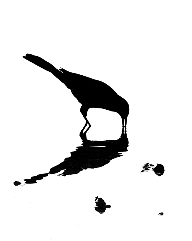 Fishing Crow Silhouette