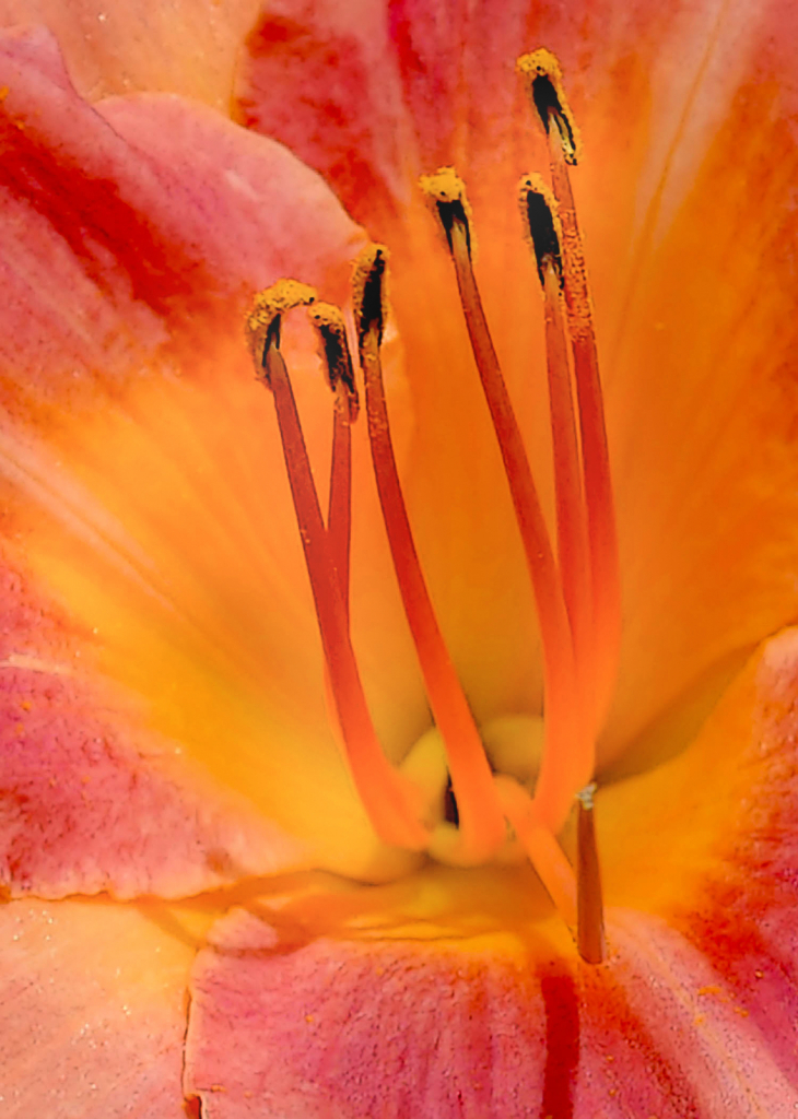Deep in the Heart of a Lilly