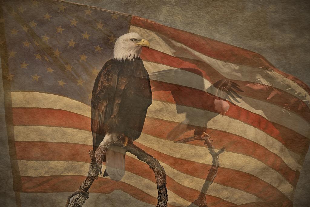 American Grunge