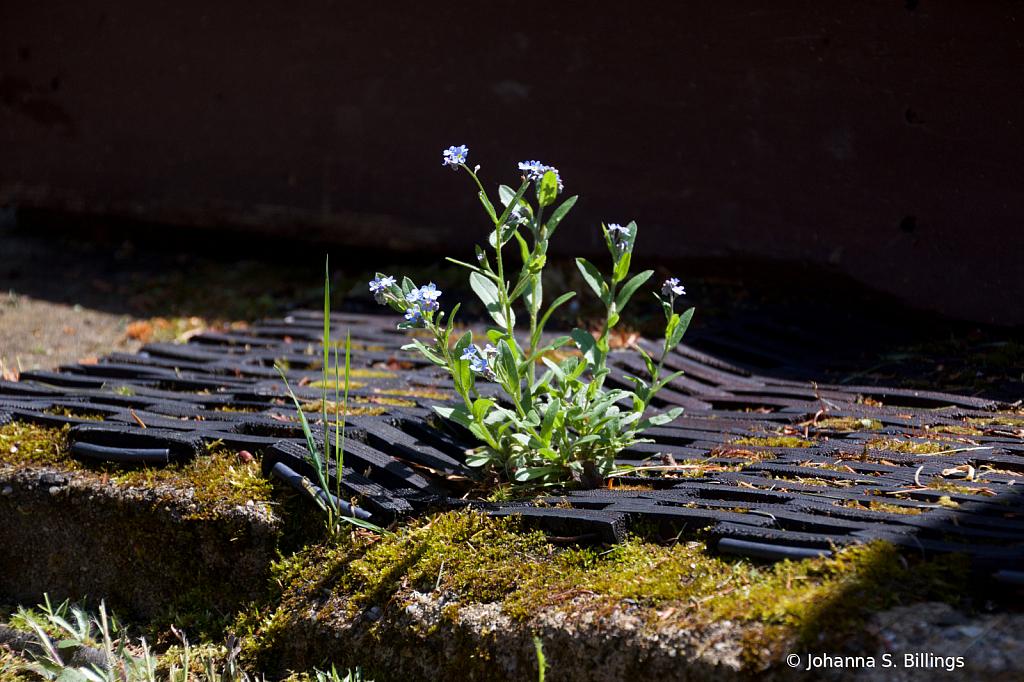 A Little Bouquet - ID: 15823292 © Johanna S. Billings