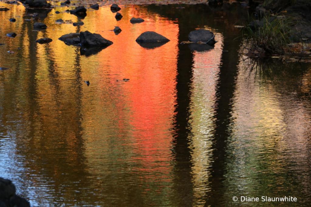 Reflections  - ID: 15823362 © Diane Slaunwhite