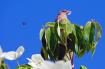 A House Sparrow G...