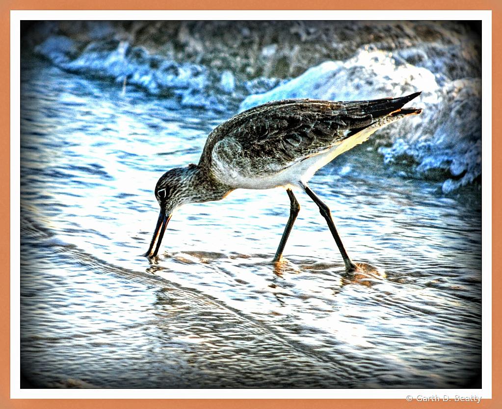 Florida Beach Bird