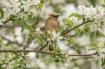 Bird in the Bloom...