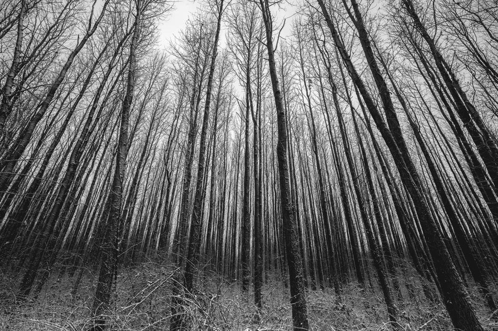 Walnut Woods - ID: 15825300 © Dreaming Tree Galleries