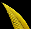 Yellowed Feather