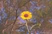 flower / expired ...