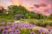 In the Garden of ...
