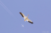 2 In Flight