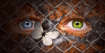 Human eyes behind...