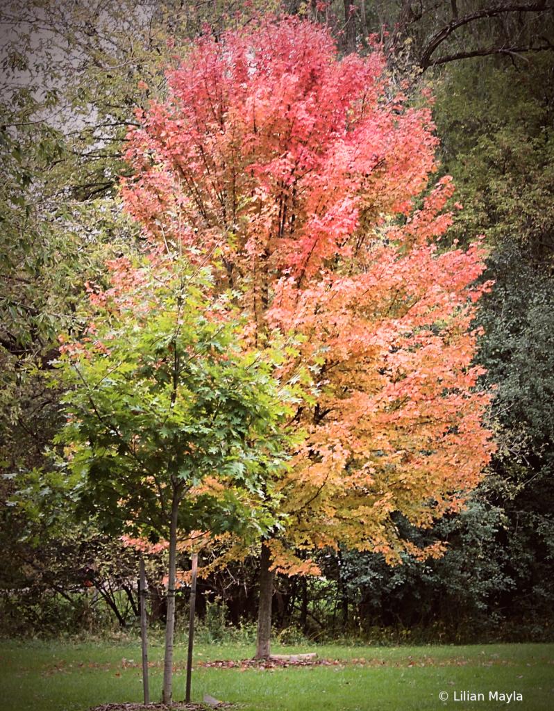 Pink Tree - ID: 15831474 © Nada Mayla