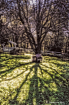 Tree Shadows of S...
