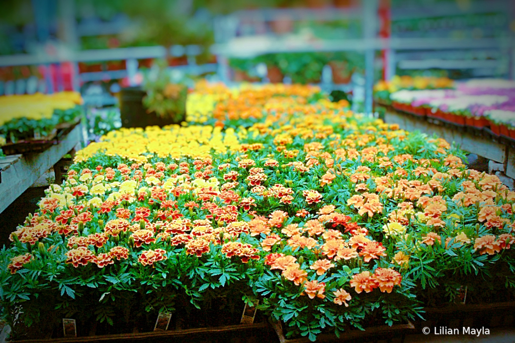 Flower display - ID: 15834435 © Nada Mayla