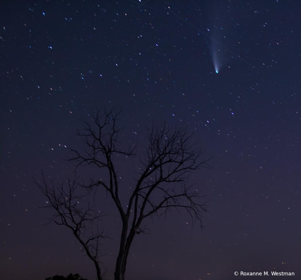 Comet and meteor in the night skies - ID: 15834602 © Roxanne M. Westman