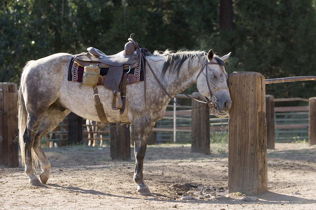 Ranch Horse - ID: 15835969 © Wendy Wyatt