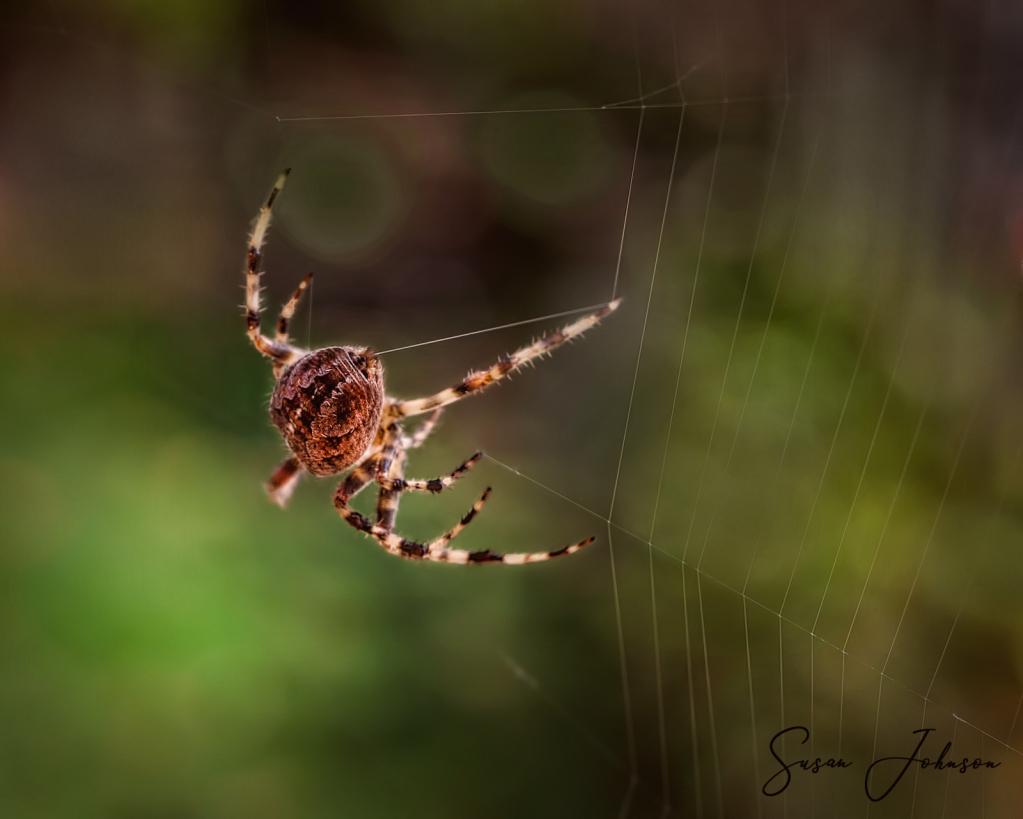 Web builder - ID: 15836471 © Susan Johnson
