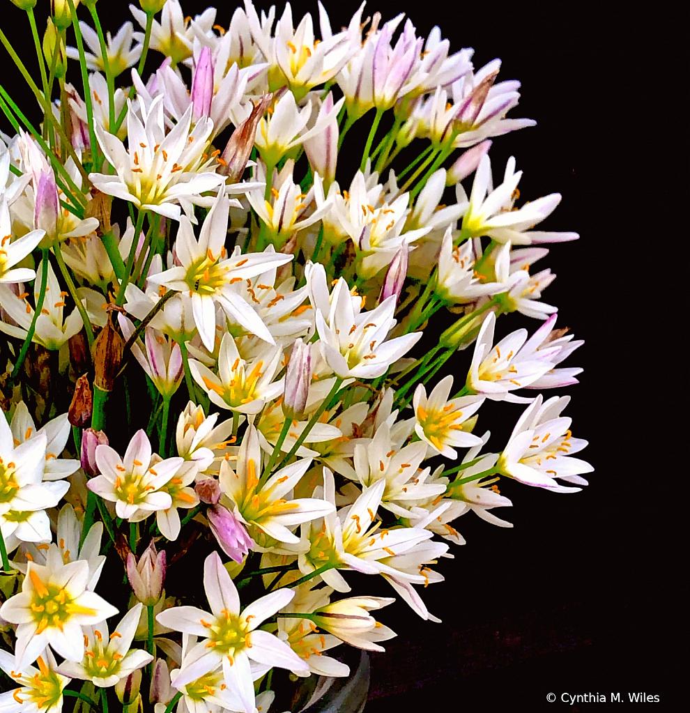 Wild Flowers - ID: 15836932 © Cynthia M. Wiles