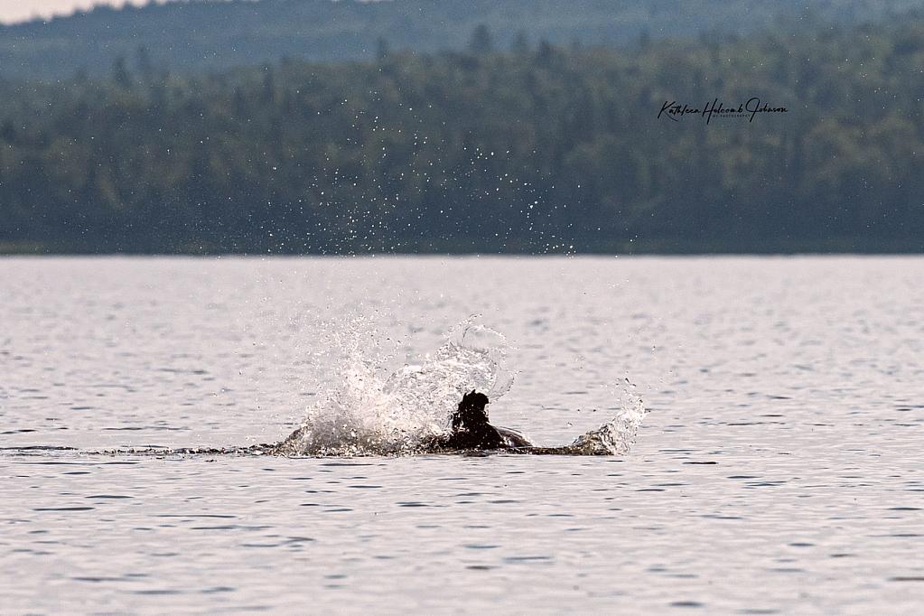 Beaver Warning - Kayaker Take Notice!