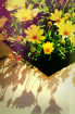 Flowers and Shado...