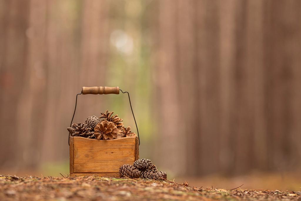 Basket of Cones