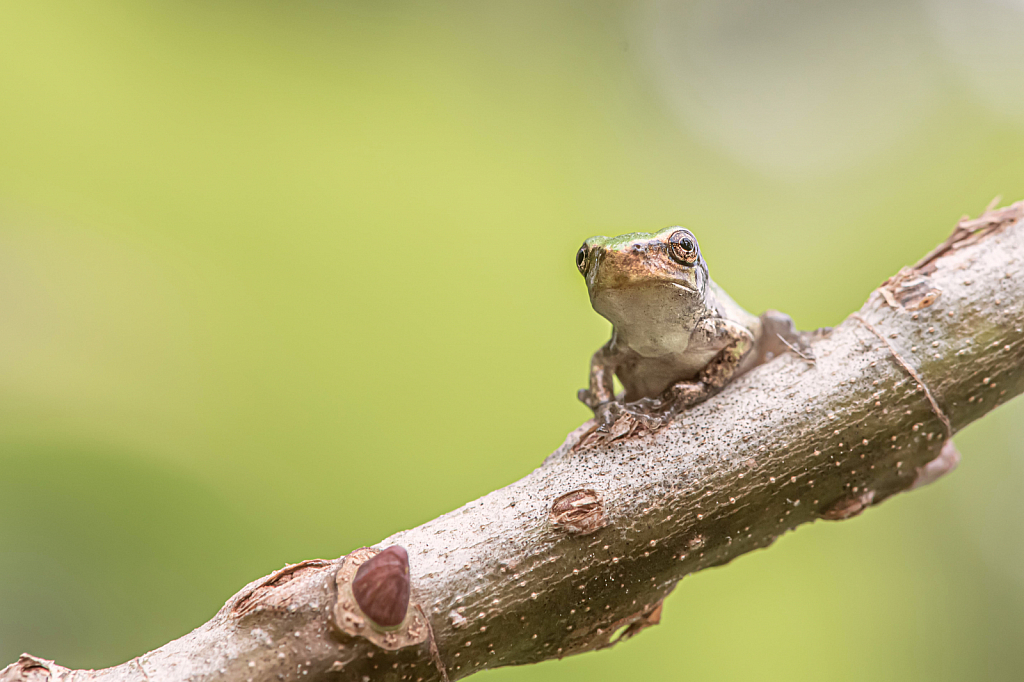 Talking to the Tree Frog