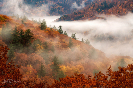 Foggy Fall Foliage - Fantastic!