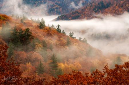 Foggy Fall Foliage - Fantastic!